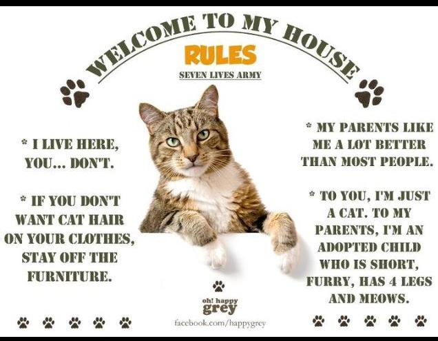 Cats House Rules